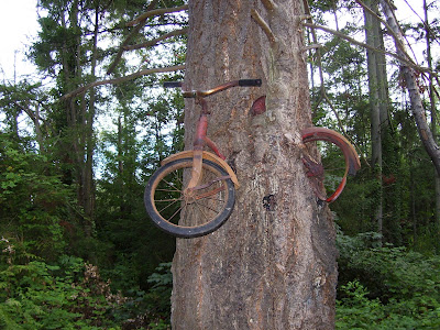Tree Grows Around Bike Amazing Photos Videos The Orbis Vitae